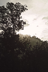 ~ (^ autumn deluded) Tags: sunrise hiking tennessee ridge mountainview gatlinburg nationalparks smokymountains naturephotography gatlinburgtn landscapephotography