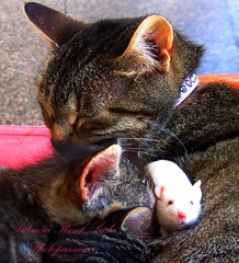 The Marvelous Family - 2 (Patrizia Ilaria Sechi) Tags: family animals cat mouse amazing sweet together incredible platinumheartaward platinumheartshalloffame