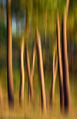 Pinos del Catalán (Juampiter) Tags: luz painting arboles bosque desenfoque pinos artedigital pinar troncos pinturadigital likeapainting desenfoqueartistico