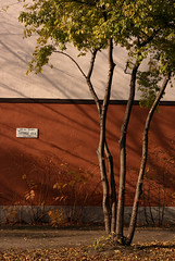 Torontl utca (sonofsteppe) Tags: life street city autumn urban detail building tree art leaves sign vertical wall architecture composition photography 50mm daylight still mural scenery colorful hungary shadows exterior outdoor budapest atmosphere nobody scene architectural explore environment series utca deciduous visual exploration streetname frontview fragment renovated streetplate bole milieu wallscape sonofsteppe pusztafia zugl trkr streetplatesofbudapest urbanlifeoftrees torontl