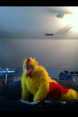 Chicken suit 70 (ChickenJay) Tags: bird chicken yellow happy zoo costume transformation mask wing beak suit talon hen birdbrain toony