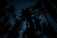 Night Skies (.monodrift) Tags: trees sky up night forest stars woods nikon looking d600
