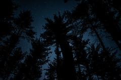 Night Skies (.monodrift) Tags: trees sky up night forest stars woods nikon looking d600