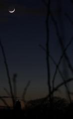 Comet PanSTARRS (r.j.scott) Tags: longexposure moon crescent astrophotography astronomy comet panstarrs