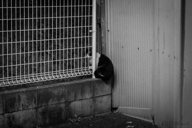 Today's Cat@2013-03-22