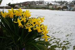(Zak355) Tags: winter snow weather scotland spring rothesay isleofbute