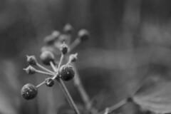DSC_0741 (dan-morris) Tags: wood sunset white black tree green wet field grass forest photo leaf moss spring nikon shoot berries bokeh bark dew 1855mm dslr depth vr damp f3556g 1855mmf3556gvr d3100
