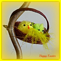 A Happy Easter - Prettige Paasdagen - Joyeuse Paques - Frohe Ostern (Cajaflez) Tags: chickens yellow jaune easter pic explore gelb ostern geel kuikens pasen paques froheostern joyeusepaques prettigepaasdagen 100commentgroup alittlebeauty ahappyeaster mygearandme mygearandmepremium