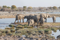Namibia 2016 (354 of 486) (Joanne Goldby) Tags: africa africanelephant august2016 elephant elephants etosha etoshanationalpark explore loxodonta namiblodgesafari namibia safari