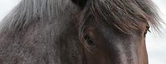 IMG_7738 (Snapshot(wo)man) Tags: rockanje powerhorse trekpaarden
