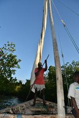 Dhow negotiating mangroves at Kilwa Kisiwani on return voyage (5) (Prof. Mortel) Tags: tanzania dhow mangroves