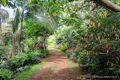 Princeville_Botanical_Gardens-4 (Chuck 55) Tags: princeville botanical gardens kauai kauaihawaii