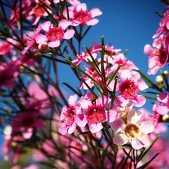 Spring is coming (leahlawler) Tags: coloursofspring colourful spring flowers