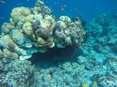 Korallenriff Malediven