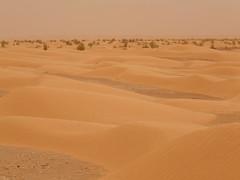 The Sahara in the Kebili Governorate (     ) (twiga_swala) Tags:       kebili governorate gouvernorat tunisie  sahara erg sand dune sea landscape scenery kbili