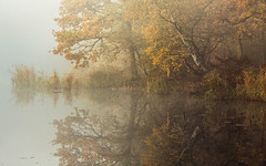 Epping Forest Pond (hammermad) Tags: forest fog foggy fun water autumn essex essexlandscapes exposure eppingforest england morning mist tree