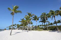 Palm Trees (Fionn Luk) Tags: fionn luk canon 5d view scene landscape trip travel vacation adventure beach tree palm paradise thefootprintdiary palmtrees florida summer smathersbeach sand