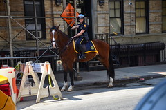 Mounted Police Officer (thoth1618) Tags: ny nyc newyork newyorkcity manhattan mounted police officer horse cop photooftheday nypd newyorkpolicedepartment mountedpolice