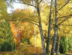 Im Nebel ruhet noch die Welt (amras_de) Tags: herbst agerro jesen tardor podzim efterr autumn autuno otoo sgis udazken syksy automne fmhar osz haust autunno autumnus hierscht ruduo rudens herfst hst jesien outono toamna autunnu hairst hst sonbahar baum tr stablo boom rbol drvo arbre strom tree arbo puu zuhaitz crann fa arbore tr albero arbor medis koks tre drzewo rvore rvulu drevo trd aga nordfriedhof wiesbaden hessen friedhof