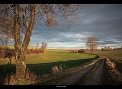along the path (bernd obervossbeck) Tags: trees tree nature way landscape path natur landschaft bume baum weg sauerland landscapephotography landschaftsfotografie canoneos60d mygearandme mygearandmepremium mygearandmebronze mygearandmesilver mygearandmegold mygearandmeplatinum mygearandmediamond