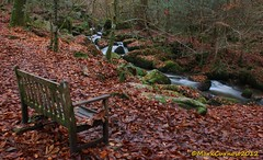 Kennel Vale (Mark Curnow Photography) Tags: longexposure autumn red brown white cold colour nature water leaves misty river bench stream cornwall seat vivid seating tranquil creamy cornish kernow ponsanooth kennelvale markcurnow markcurnowphotography