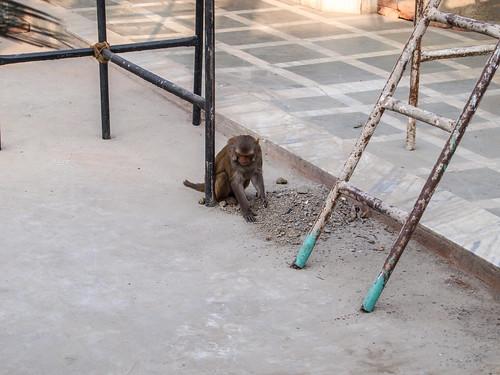 Indien2010_ChhatarpurTemple_(20101202)_047