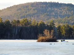 Moose Pond (RonG58) Tags: mountain lake ice water landscape island woods fort moosepond mizu leau ellago topshots bridgtonmaine camerafinepix elagua mizuumi daswasser dailynaturetnc12 flickkrsportal hs20exrphotographnewliverawnaturegeotaggedforestmorila watermainerong58imageswinterpicturesdayimagecolorfilmphotographytravelphotophotosusauslighttripfugifilmpicturedigital