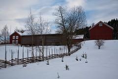Old farm (estenvik) Tags: winter norway museum barn vinter farm tun egge grd nordtrndelag lve skigard steinkjer grdesgrd estenvik erikstenvik