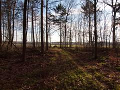 (Jeroen Hillenga) Tags: trees netherlands landscape bomen natuur friesland landschap bakkeveen bakkeveensterduinen