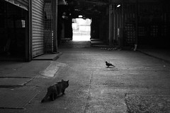 (Kevin Law Photography ) Tags: china street camera people bird cat photography hongkong yahoo blackwhite amazing asia flickr kevin photographer explore fujifilm  goodwood fotop   yahoohongkong xe1  yahoohk kevinlaw kevinlawphotography kevinphotography fluidr mygearandme lawkalun kevinlawphotographyhongkong goodwoodphotography fujifilmxe1 fujixe1