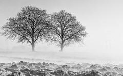 Matine brumeuse (@lain G) Tags: france nature eau terre iledefrance brouillard seineetmarne varennes seinemarne
