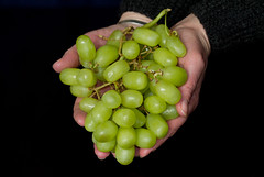 Bunch of grapes (Mukumbura) Tags: food fruit hands indoors grapes bunch handful