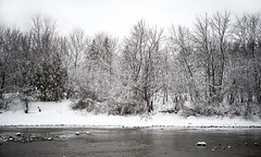 Frost (Victoria Wozniak) Tags: trees winter white snow ontario canada tree ice beautiful river landscape frost scene winterscape waterscape