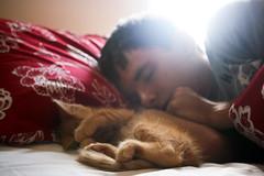 (corinnevelez) Tags: sleeping red orange pet baby animal digital cat bed kitten nap oliver tabby brandon canonxti august2009