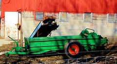 Fill 'er up (Images by MK) Tags: blue shadow red green barn canon cattle farm farming fertilizer calf manure spreader heifer t2i