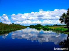 a quiet day (David Ripamonti) Tags: park blue sky panorama reflection verde green water clouds canon landscape day quiet view florida blu swamp everglades
