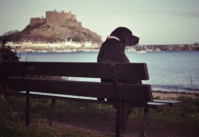 Bird watching on bench 385