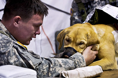 K-9 Comfort (The U.S. Army) Tags: usa scott army la us louisiana exercise military navy medical airforce combat operation usaf 1304 kadena ftpolk ramstein fortpolk aeromedical jrtc jointreadinesstrainingcenter rotation1304