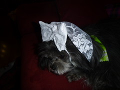 Head piece with bow and small veil (DianaDesignsNY and the Gs) Tags: wedding bride veil weddingdress dogclothes bridaldress