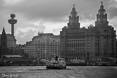 Morning River Mersey Ferry to Liverpool (Dave Wood Liverpool Images) Tags: uk england ferry liverpool waterfront maritime rivermersey merseyferries royalirisofthemersey