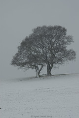 Tree in the snow  (Explored) (Rhoda Dendrum) Tags: snow tree landscape nikon nikond70 365 project365 6365 sigma28300mm alvecote