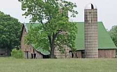 """ You Want See No City, When You Look At Me, Cause The Country Is All I Am , I Love A Running Barefooted Thru The Old Corn Fields, And I Love That Country Ham"" (~ Cindy~) Tags: barn countryside tennessee sweetwater weatherworn tatteredtorn pasturefields doublesilosgreenerytrees 2016june happybarnmonday"