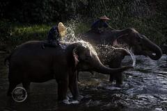 Revenge! - Elephant
