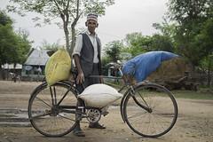 Farmer Ramnath Dakal transports bags of rice on his bicycle in Rambasti, Kanchanpur. (CIMMYT) Tags: nepal csisa cimmyt maize agriculture smallholder farmer mechanization asia