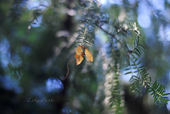 - (-LilyBeth) Tags: nature natura nikon dof depthoffield d3000 wonderfulworld outside bokeh summer colors light luce