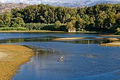 Lake of Agias (giozaha) Tags: lake crete nature birds