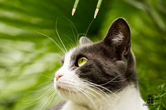 Lexie 2 (antonioscoletta) Tags: animali gatto natura felini giardini canon 1200d estate