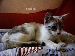 FELZ SBADO ANIMAL AMIG@S- (CarmenCordero1949) Tags: gatita carmen blanca gris