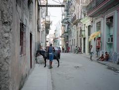 Streets of Havana - Cuba (IV2K) Tags: havana habana lahabana cuba cuban suba caribbean centro centrohabana centrohavana street donkey mamaya mamiya7ii mamiya7 film analogue kodak kodak400 kodakportra kodakportra400 portra