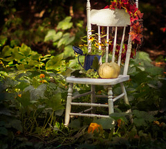 a touch of autumn (bonnie5378) Tags: oldchair whitepumpkin wreathaug2016grapes from our grape vines coth coth5